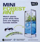 Forest Ant Mini Antquarium