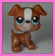 +++ LITTLEST PET SHOP - LPS - PES BOXER +++
